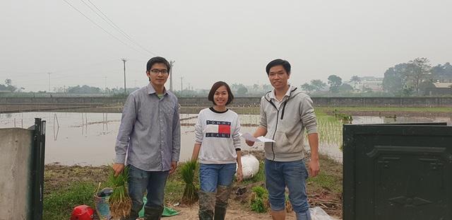 Độc đáo bản đồ Việt Nam ghép từ cây lúa ở Học viện Nông nghiệp - 3