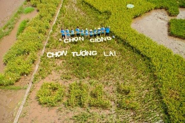Độc đáo bản đồ Việt Nam ghép từ cây lúa ở Học viện Nông nghiệp - 5