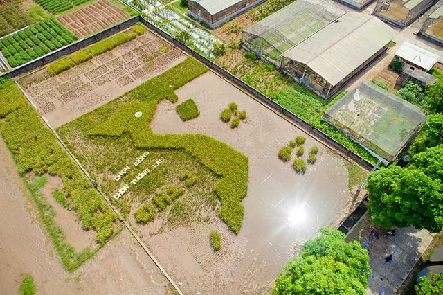 Độc đáo bản đồ Việt Nam ghép từ cây lúa ở Học viện Nông nghiệp - 6