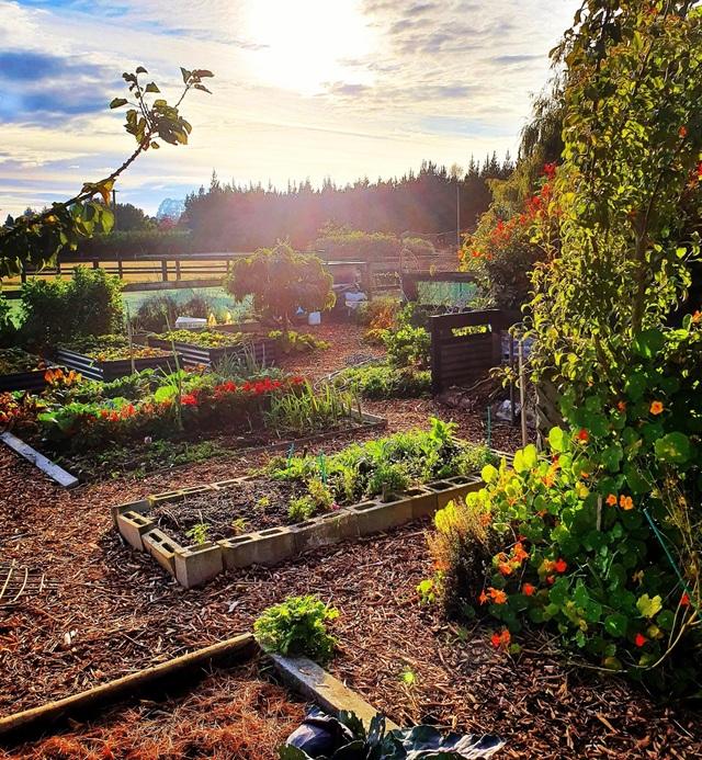 """Vườn rau trái trĩu trịt """"vạn người mê"""" của bà mẹ một con ở New Zealand - 3"""