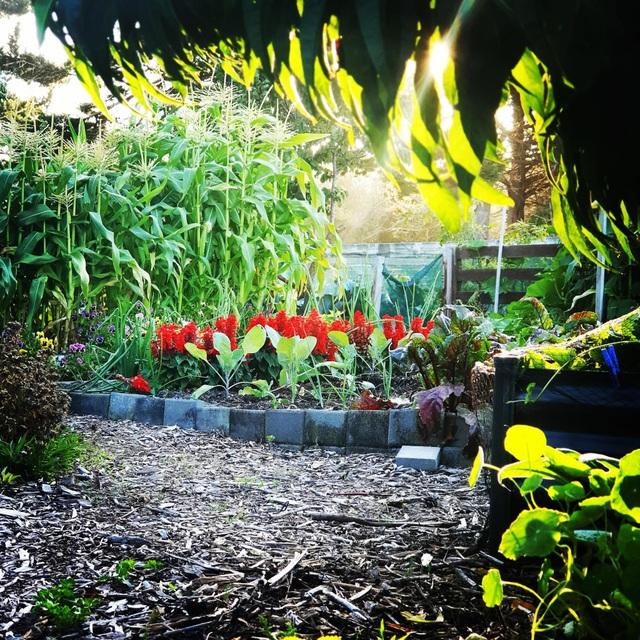 """Vườn rau trái trĩu trịt """"vạn người mê"""" của bà mẹ một con ở New Zealand - 5"""