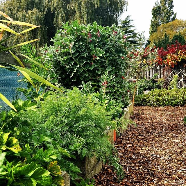 """Vườn rau trái trĩu trịt """"vạn người mê"""" của bà mẹ một con ở New Zealand - 7"""