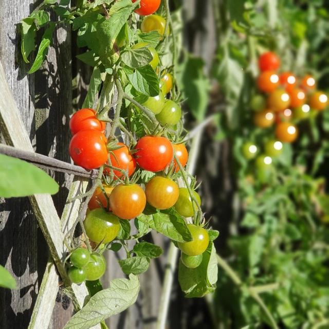"""Vườn rau trái trĩu trịt """"vạn người mê"""" của bà mẹ một con ở New Zealand - 9"""