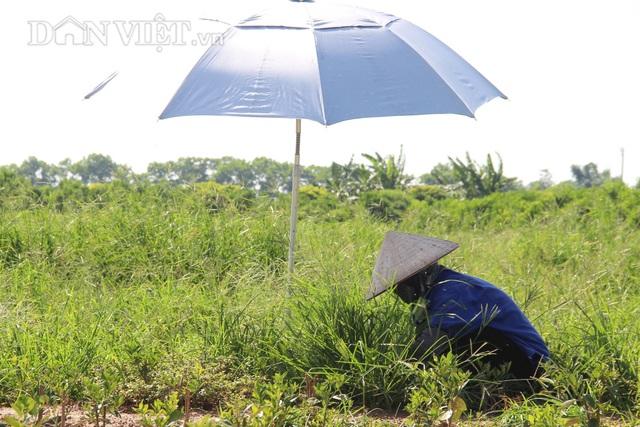 Nam Định: Trồng loại quất ăn sạch, ở sạch, lời nửa tỷ đồng mỗi năm - 5