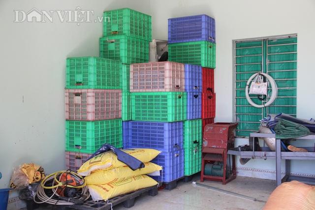 Nam Định: Trồng loại quất ăn sạch, ở sạch, lời nửa tỷ đồng mỗi năm - 6