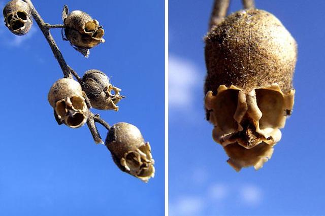 """Những """"kỳ hoa dị thảo"""" như đến từ hành tinh lạ - 1"""