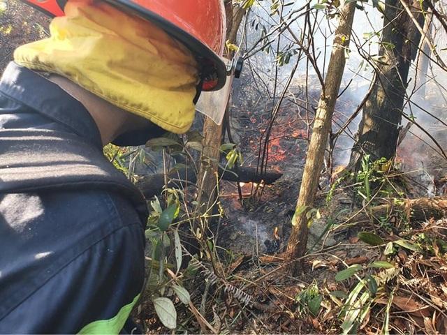 Đám cháy rừng bùng phát trở lại sau hơn 10 giờ bị khống chế - 1