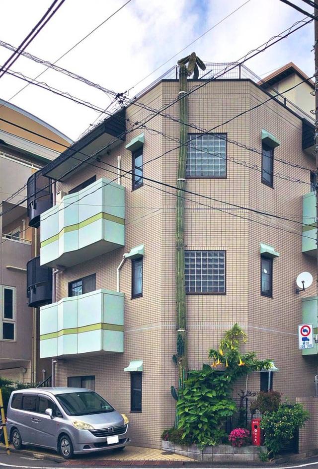 Khó tin cây xương rồng cao hơn cả toà nhà 3 tầng  - 3