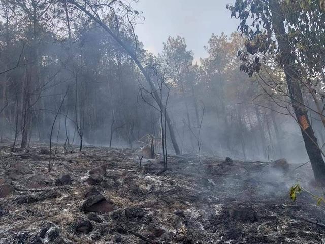 Cảnh rừng hoang tàn sau nhiều đợt cháy lớn liên tiếp - 9