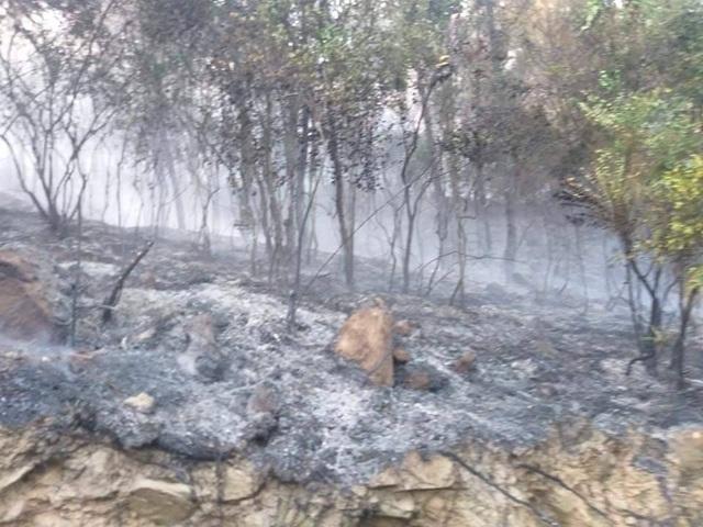 Cảnh rừng hoang tàn sau nhiều đợt cháy lớn liên tiếp - 11