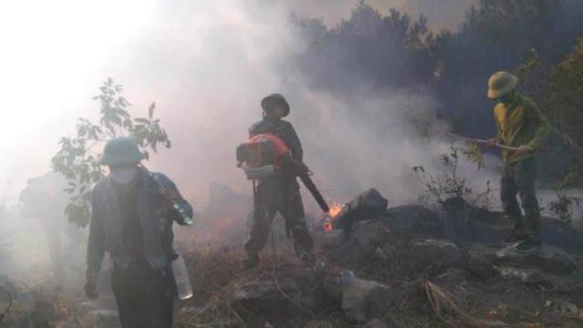Cảnh rừng hoang tàn sau nhiều đợt cháy lớn liên tiếp - 12