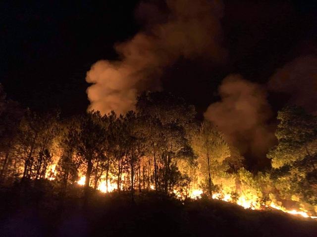 Cảnh rừng hoang tàn sau nhiều đợt cháy lớn liên tiếp - 1