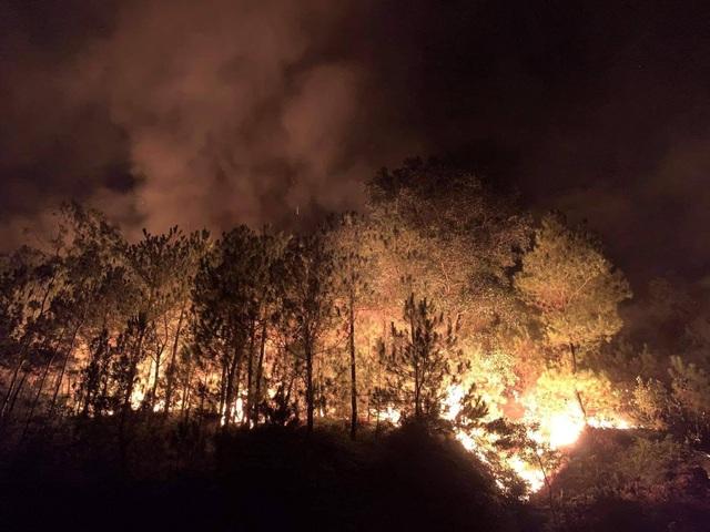 Cảnh rừng hoang tàn sau nhiều đợt cháy lớn liên tiếp - 2