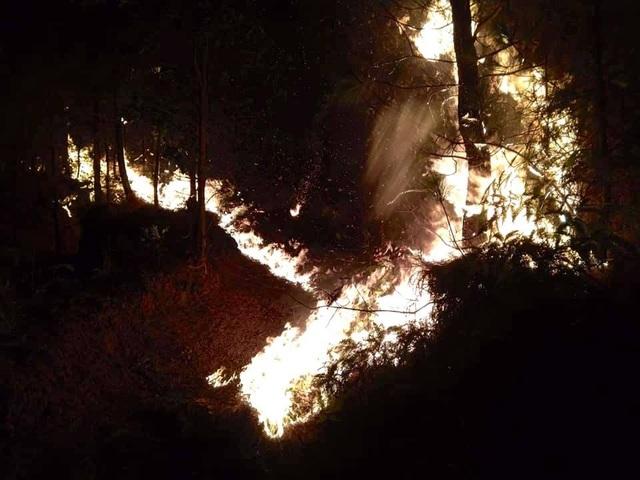Cảnh rừng hoang tàn sau nhiều đợt cháy lớn liên tiếp - 3
