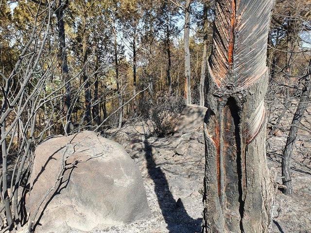 Cảnh rừng hoang tàn sau nhiều đợt cháy lớn liên tiếp - 5