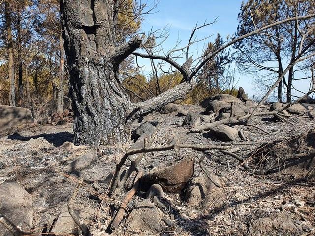 Cảnh rừng hoang tàn sau nhiều đợt cháy lớn liên tiếp - 10