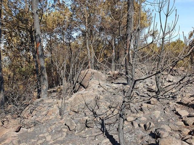 Cảnh rừng hoang tàn sau nhiều đợt cháy lớn liên tiếp - 4