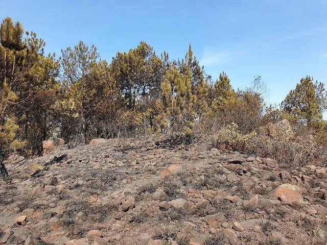 Cảnh rừng hoang tàn sau nhiều đợt cháy lớn liên tiếp - 7