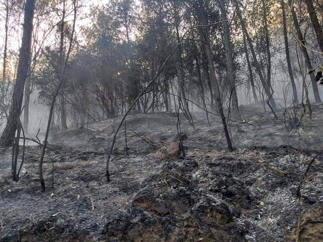 Cảnh rừng hoang tàn sau nhiều đợt cháy lớn liên tiếp - 6