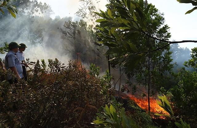 Bộ Nông nghiệp chỉ đạo các biện pháp ngăn thảm họa cháy rừng - 2