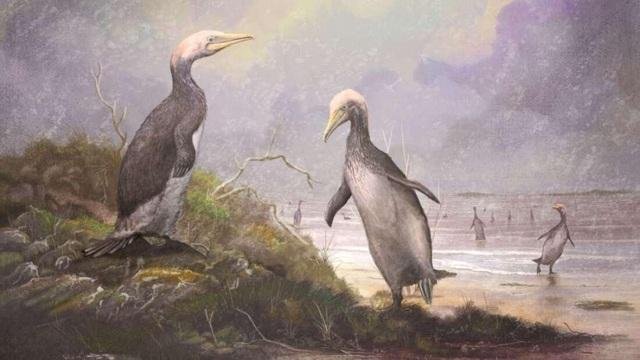 Phát hiện hóa thạch loài chim khổng lồ mới ở Bắc bán cầu - 1