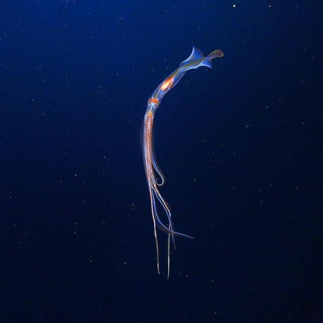 Những kỳ quan vĩ đại ngoài rạn san hô lớn - 4