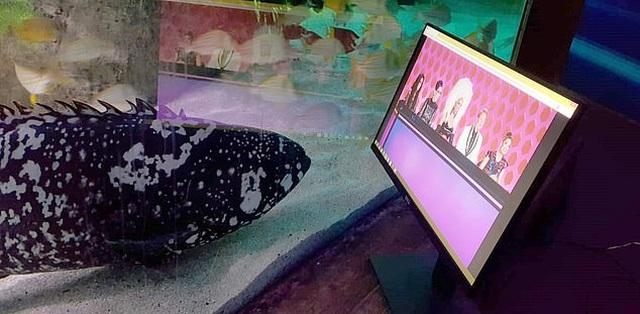 Sợ cá buồn, công viên dành riêng màn hình cho cá... xem phim - 1