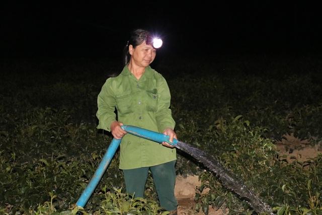 Xót ruột vì cây héo khô, người trồng chè thức trắng đêm tưới nước - 12