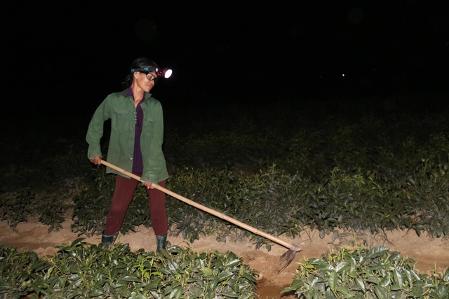 Xót ruột vì cây héo khô, người trồng chè thức trắng đêm tưới nước - 10