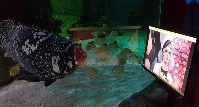 Sợ cá buồn, công viên dành riêng màn hình cho cá... xem phim - 3