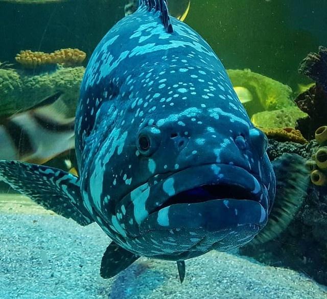Sợ cá buồn, công viên dành riêng màn hình cho cá... xem phim - 2