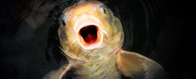Vì sao cá có thể xuất hiện ở những vùng nước bị cô lập hoàn toàn? - 1