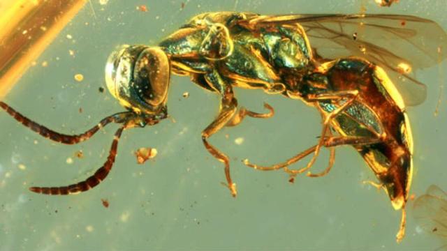 Mẫu hổ phách tiết lộ màu sắc sống động của côn trùng 99 triệu năm tuổi - 1