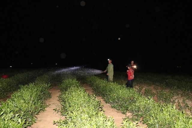 Xót ruột vì cây héo khô, người trồng chè thức trắng đêm tưới nước - 15