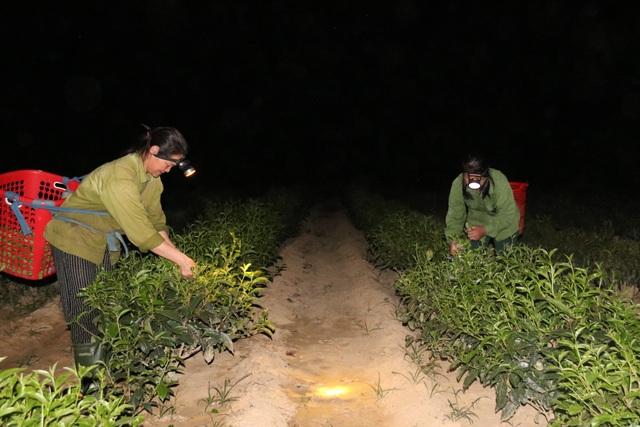 Xót ruột vì cây héo khô, người trồng chè thức trắng đêm tưới nước - 17