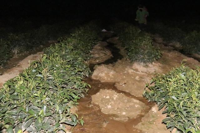 Xót ruột vì cây héo khô, người trồng chè thức trắng đêm tưới nước - 16
