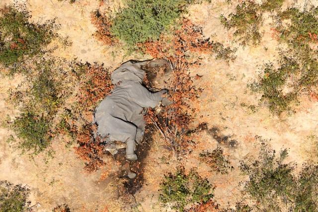 Bí ẩn hàng trăm con voi chết gần hồ nước - 1