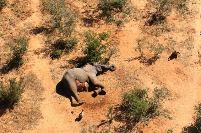 Bí ẩn hàng trăm con voi chết gần hồ nước - 2