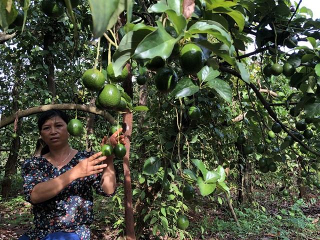 Người phụ nữ làm kinh tế giỏi hiến hơn 1.500m2 đất làm đường - 1