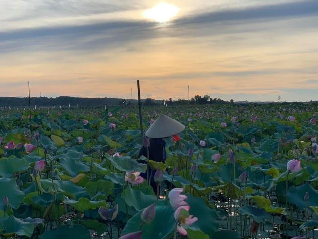 Hà Tĩnh: Kiếm tiền từ thu hoạch sen cuối vụ - 7