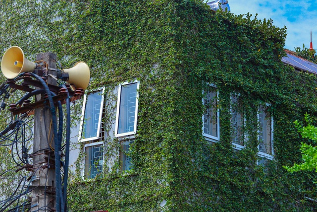 """Sững sờ trước ngôi nhà phố được """"ngụy trang"""" bằng dây leo ở Hà Nội - 2"""