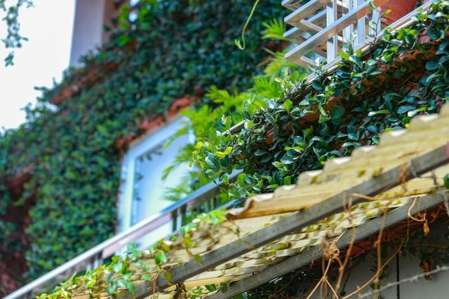 """Sững sờ trước ngôi nhà phố được """"ngụy trang"""" bằng dây leo ở Hà Nội - 8"""