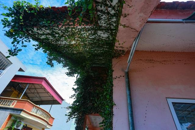 """Sững sờ trước ngôi nhà phố được """"ngụy trang"""" bằng dây leo ở Hà Nội - 10"""