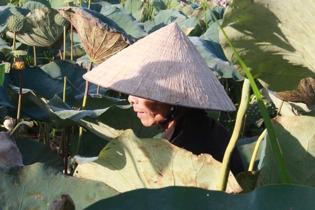 Hà Tĩnh: Kiếm tiền từ thu hoạch sen cuối vụ - 10