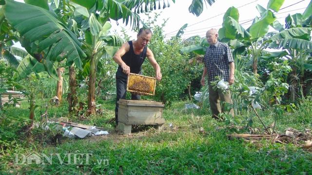 Thái Nguyên: U80 nuôi ong cho vui, ai ngờ tạo nên cả cơ nghiệp lớn - 2