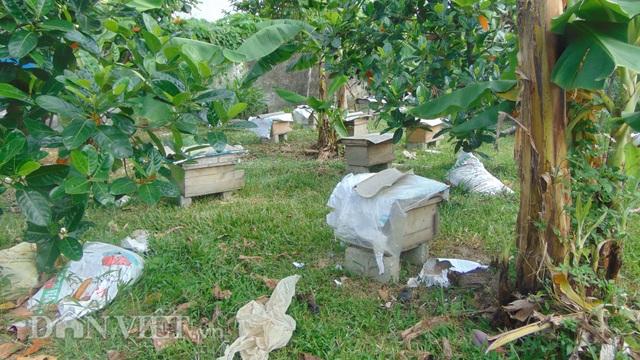 Thái Nguyên: U80 nuôi ong cho vui, ai ngờ tạo nên cả cơ nghiệp lớn - 3
