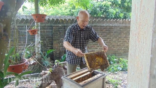 Thái Nguyên: U80 nuôi ong cho vui, ai ngờ tạo nên cả cơ nghiệp lớn - 4