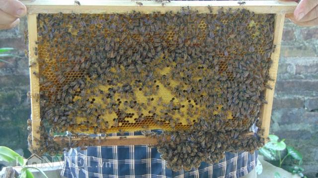 Thái Nguyên: U80 nuôi ong cho vui, ai ngờ tạo nên cả cơ nghiệp lớn - 5
