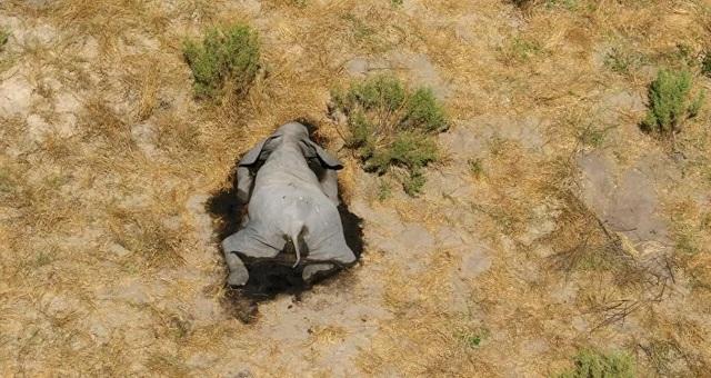 Các nhà khoa học điều tra cái chết bí ẩn của những con voi ở Botswana - 1