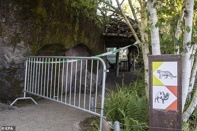 Nhân viên vườn thú bị hổ tấn công tử vong - 2